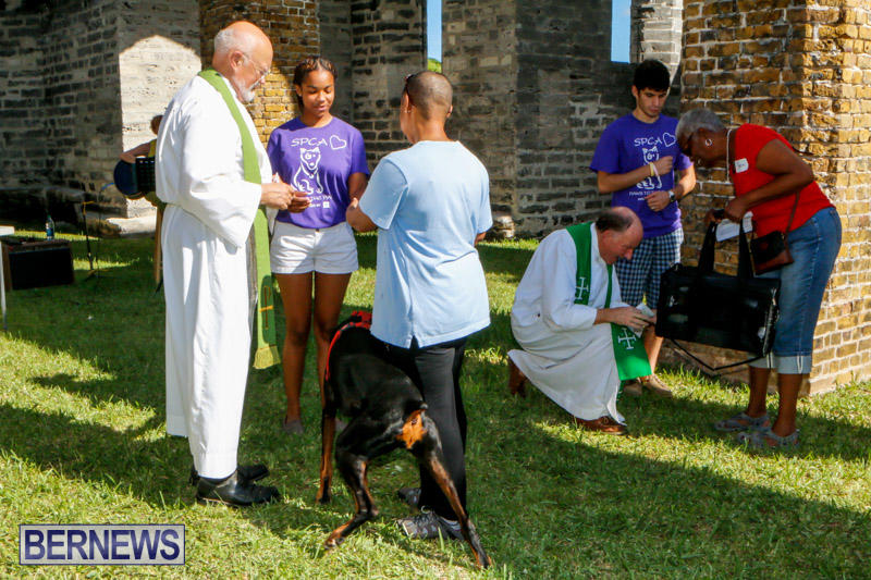 Blessing-Of-The-Animals-Service-Bermuda-October-5-2014-34