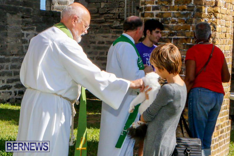 Blessing-Of-The-Animals-Service-Bermuda-October-5-2014-35
