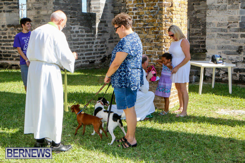 Blessing-Of-The-Animals-Service-Bermuda-October-5-2014-37