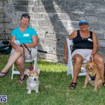 Blessing Of The Animals Service Bermuda, October 5 2014-5