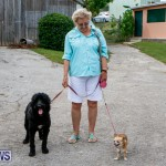 SPCA Fun Fair Bermuda, October 11 2014-22