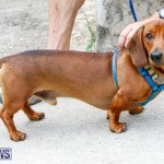 SPCA Fun Fair Bermuda, October 11 2014-30