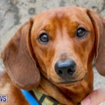 SPCA Fun Fair Bermuda, October 11 2014-32