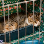 SPCA Fun Fair Bermuda, October 11 2014-55