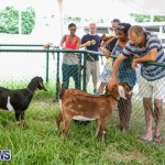 SPCA Fun Fair Bermuda, October 11 2014-65