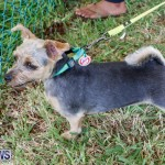 SPCA Fun Fair Bermuda, October 11 2014-67
