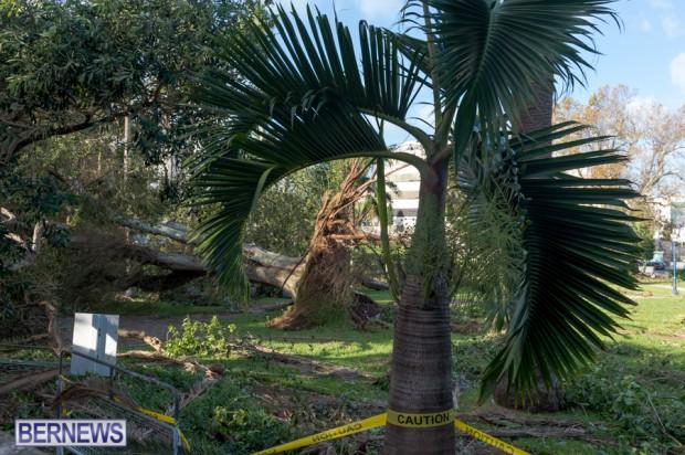 Victoria Park Bermuda after Storm Fay 2014 (4)