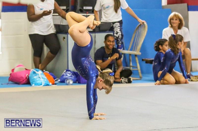 sweetheart meet results gymnastics 2014