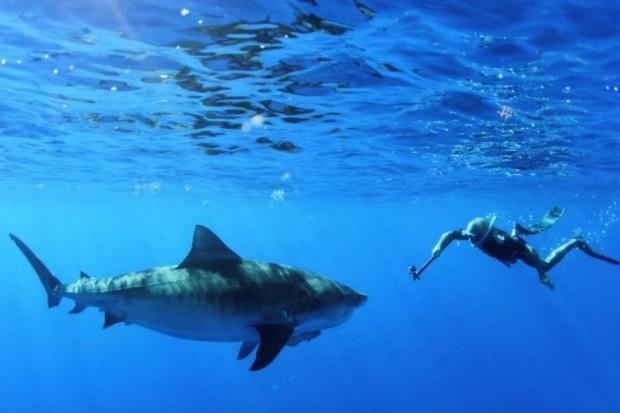 neil-burnie-shark-swimming