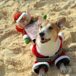 Bermuda Christmas at Elbow Beach 2014 (15)