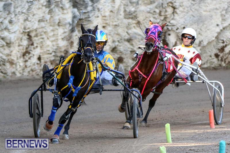 Harness-Pony-Racing-Bermuda-January-1-2015-11