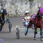 Harness Pony Racing Bermuda, January 1 2015-14