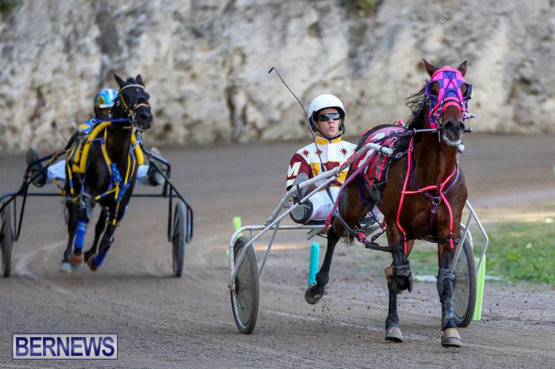 Harness-Pony-Racing-Bermuda-January-1-2015-14