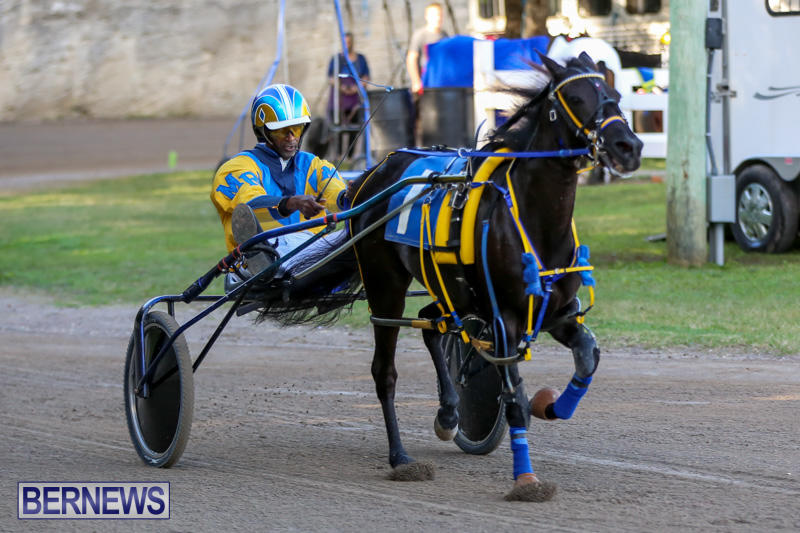 Photos Video Results New Year S Pony Racing Bernews