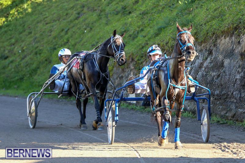 Harness-Pony-Racing-Bermuda-January-1-2015-17