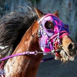 Harness Pony Racing Bermuda, January 1 2015-2
