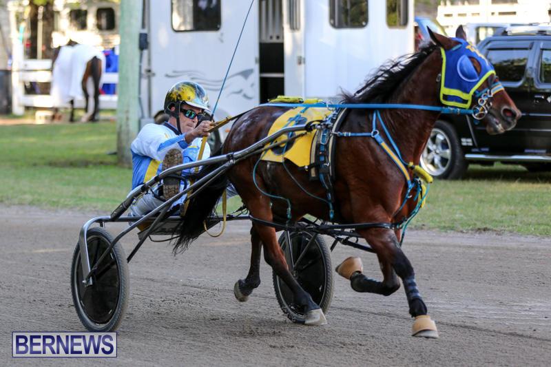 Harness-Pony-Racing-Bermuda-January-1-2015-20