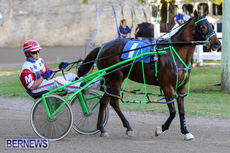 Harness-Pony-Racing-Bermuda-January-1-2015-21