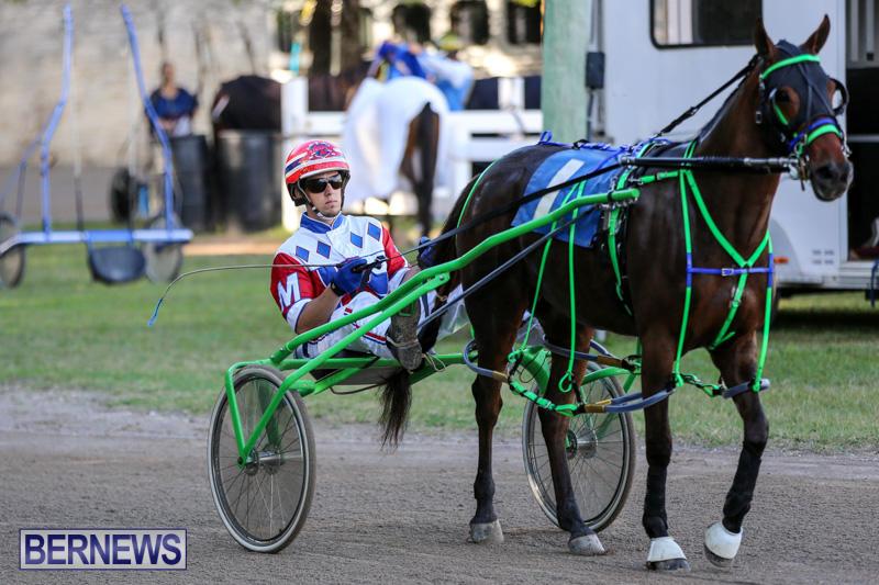 Harness-Pony-Racing-Bermuda-January-1-2015-22