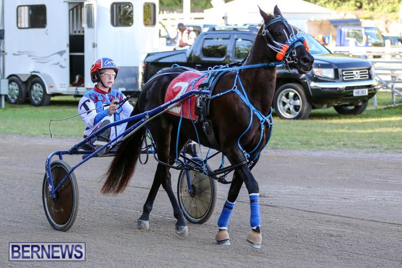 Harness-Pony-Racing-Bermuda-January-1-2015-23