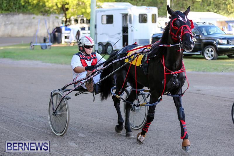 Harness-Pony-Racing-Bermuda-January-1-2015-24