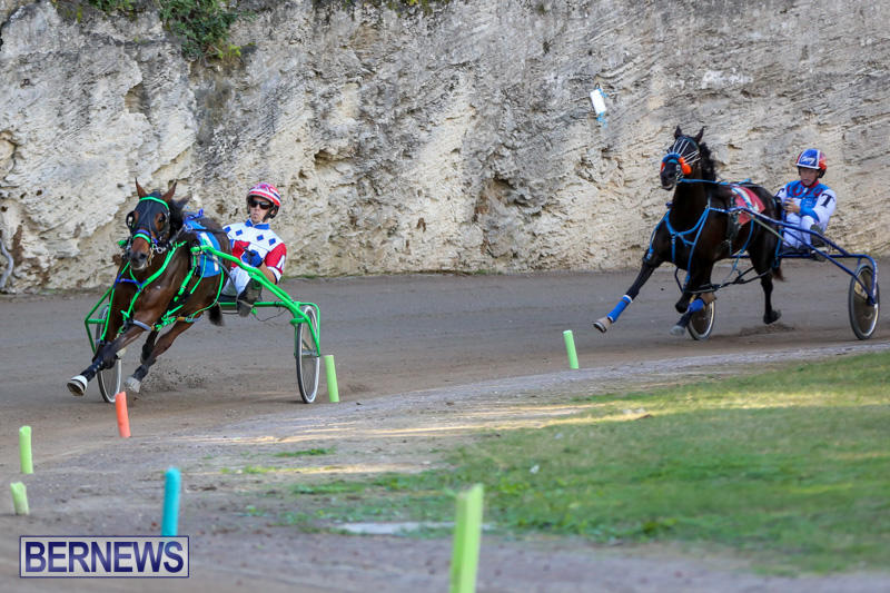 Harness-Pony-Racing-Bermuda-January-1-2015-26