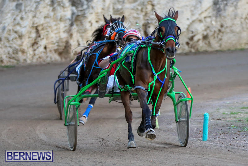 Harness-Pony-Racing-Bermuda-January-1-2015-28