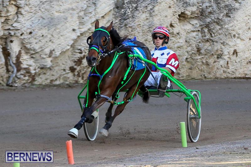 Harness-Pony-Racing-Bermuda-January-1-2015-31