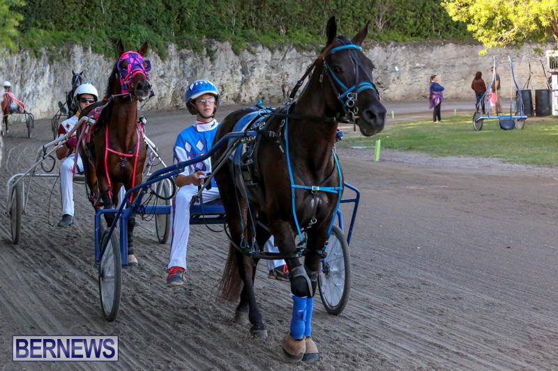Harness-Pony-Racing-Bermuda-January-1-2015-4