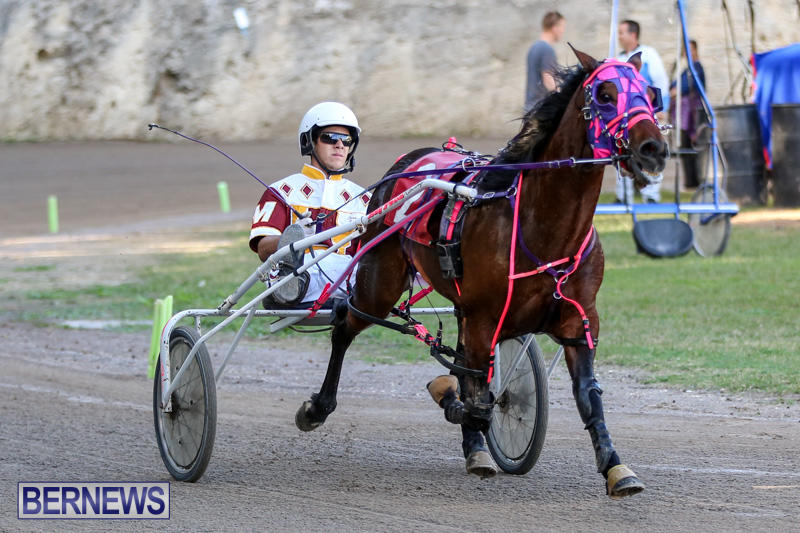 Harness-Pony-Racing-Bermuda-January-1-2015-9