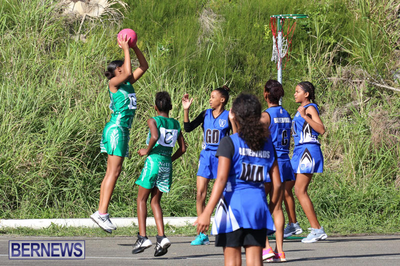 Netball-Bermuda-January-17-2015-3