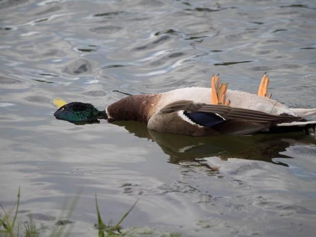 dead-duck-jan-2015