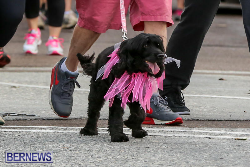 Argus-Walk-Bermuda-February-22-2015-22