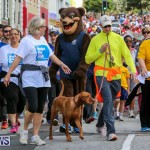 Argus Walk Bermuda, February 22 2015-28