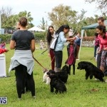 SPCA Paws To The Park Bermuda, March 1 2015-14
