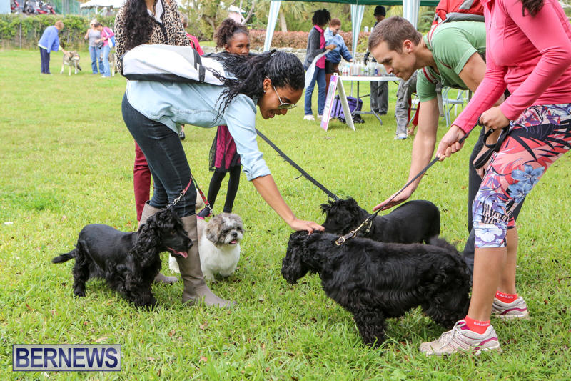 SPCA-Paws-To-The-Park-Bermuda-March-1-2015-15