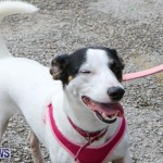 SPCA Paws To The Park Bermuda, March 1 2015-2