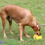 SPCA Paws To The Park Bermuda, March 1 2015-22