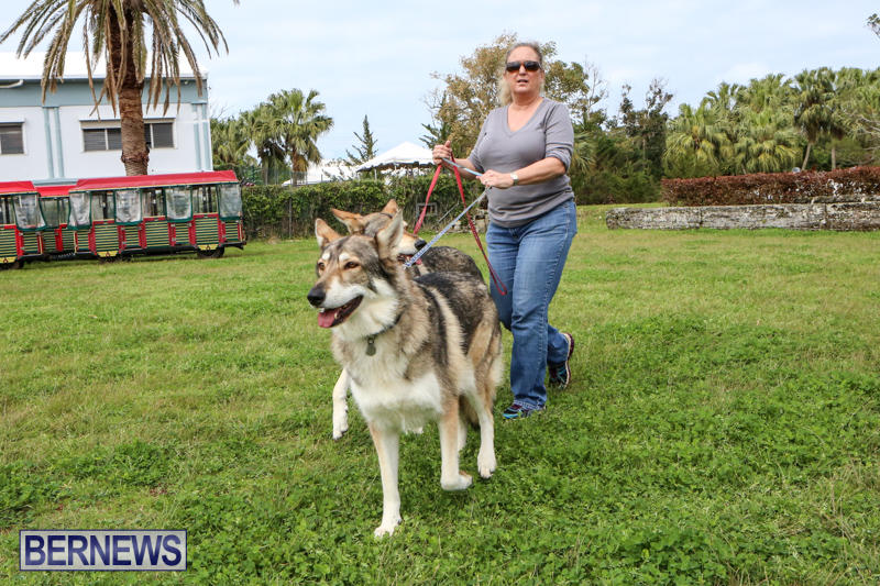 SPCA-Paws-To-The-Park-Bermuda-March-1-2015-24