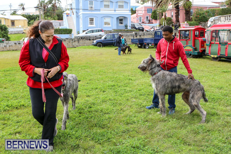 SPCA-Paws-To-The-Park-Bermuda-March-1-2015-27