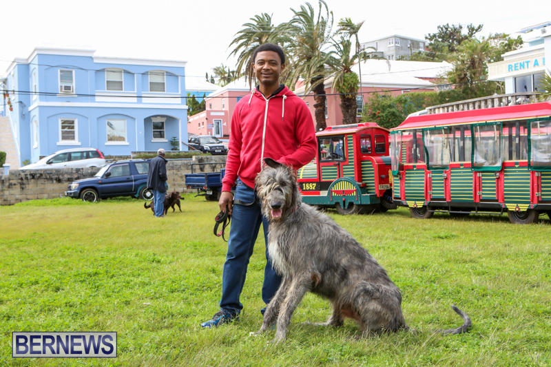 SPCA-Paws-To-The-Park-Bermuda-March-1-2015-28
