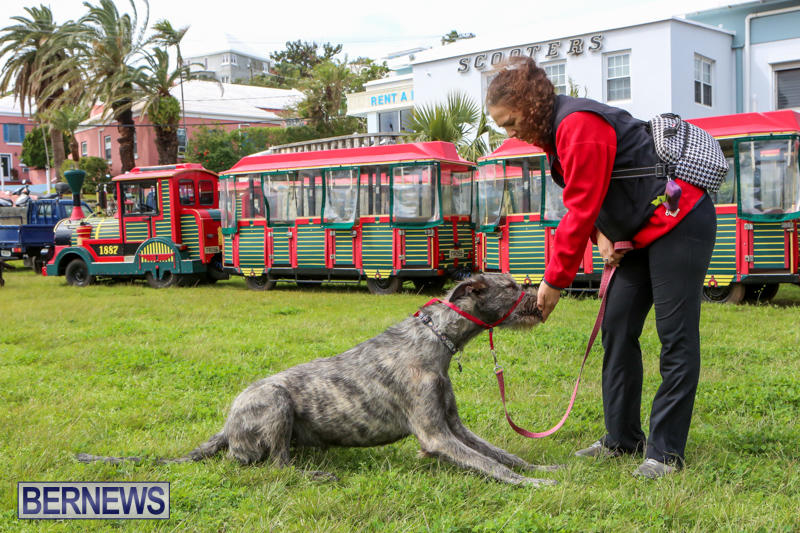 SPCA-Paws-To-The-Park-Bermuda-March-1-2015-33