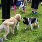 SPCA Paws To The Park Bermuda, March 1 2015-37
