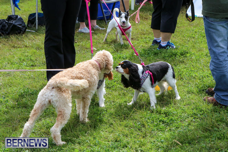 SPCA-Paws-To-The-Park-Bermuda-March-1-2015-37