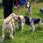 SPCA Paws To The Park Bermuda, March 1 2015-38