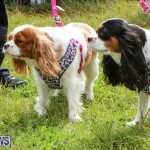 SPCA Paws To The Park Bermuda, March 1 2015-39