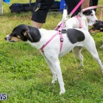 SPCA Paws To The Park Bermuda, March 1 2015-41