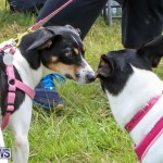 SPCA Paws To The Park Bermuda, March 1 2015-42