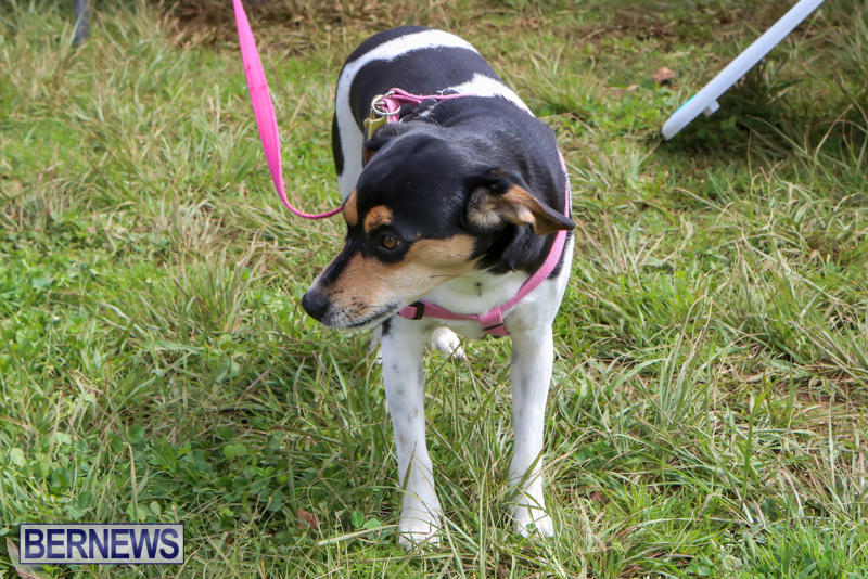 SPCA-Paws-To-The-Park-Bermuda-March-1-2015-43