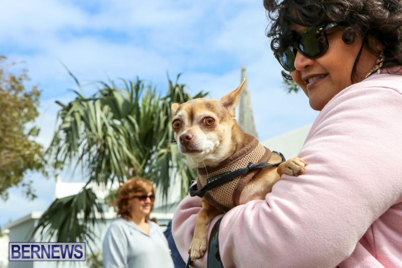 SPCA-Paws-To-The-Park-Bermuda-March-1-2015-58